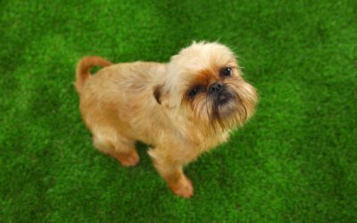 Protect Your Dog's Coat with Realistic Artificial Grass in San Antonio, TX