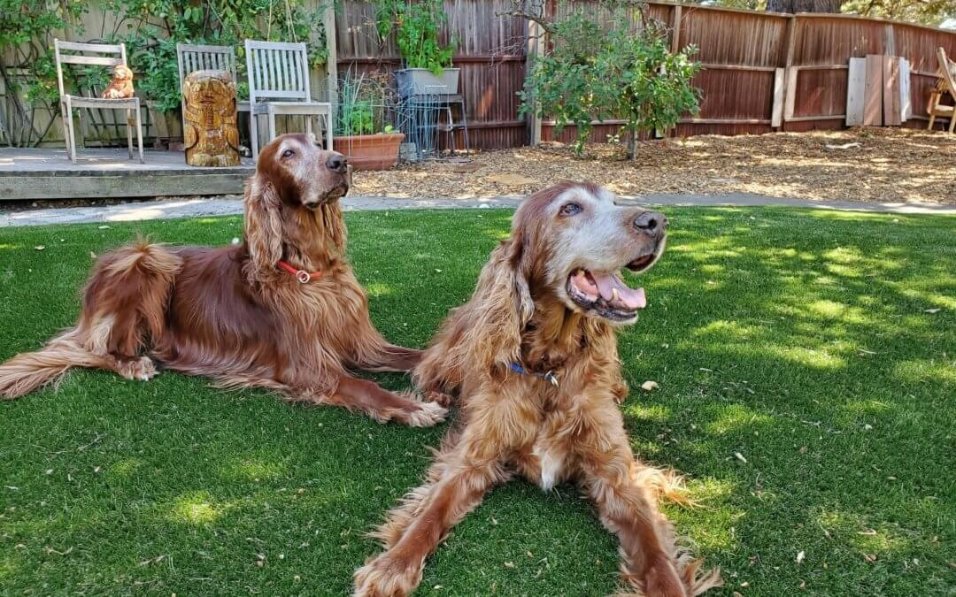 The Easy Guide to Maintaining Artificial Grass for Pets in San Antonio