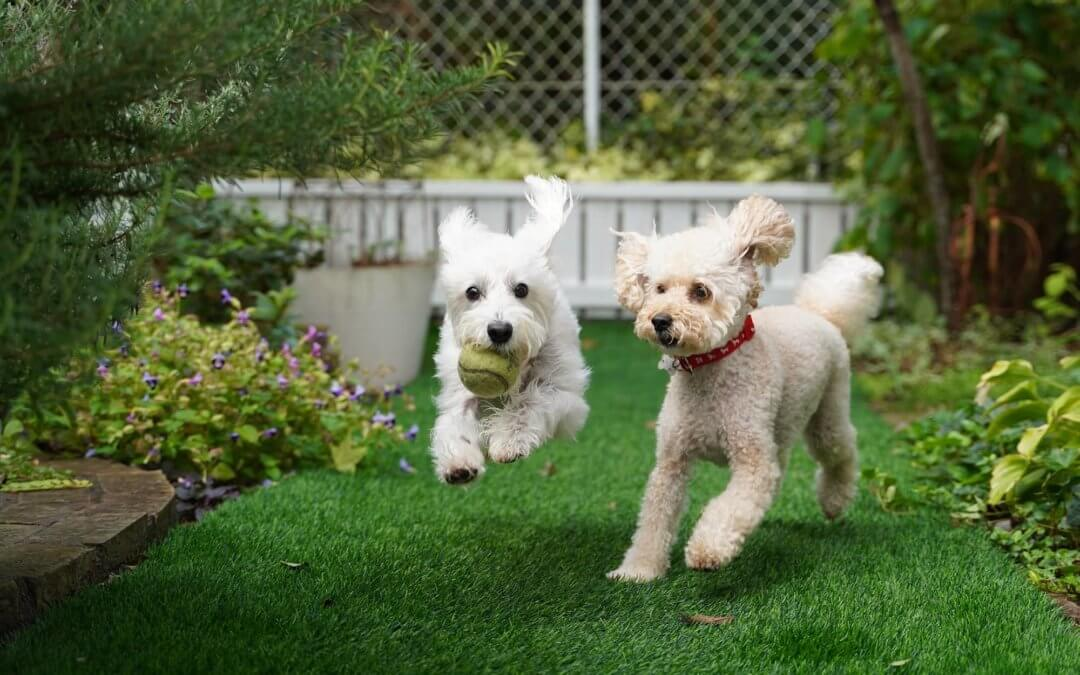 Simplify Outdoor Playtimes With Your Dog With Artificial Grass for Pets in San Antonio
